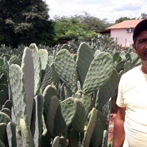 Dom Expedito Lopes ultrapassa produções nacionais no cultivo da palma adensada