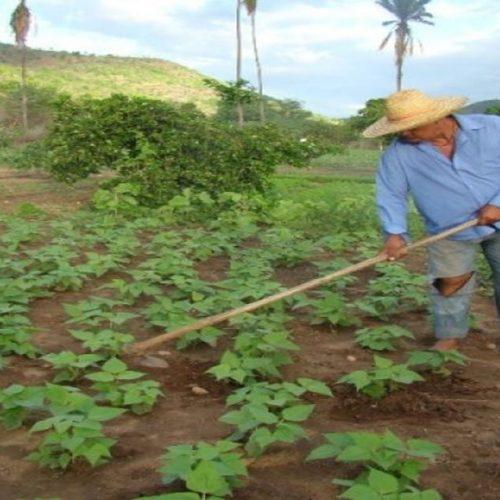 Com chuvas abaixo da média, INMET orienta que agricultores picoenses plantem feijão