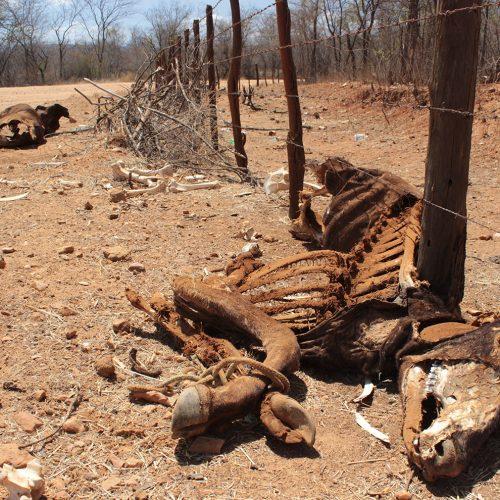 Ocorrências naturais deixaram 17,4 mil piauienses sem moradia; Jaicós está entre os municípios afetados