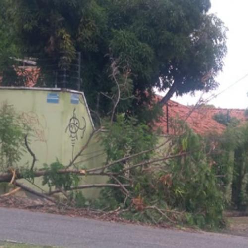 Tempestade derruba árvores e causa destruição em Teresina; ventos chegam a 65,5km/h