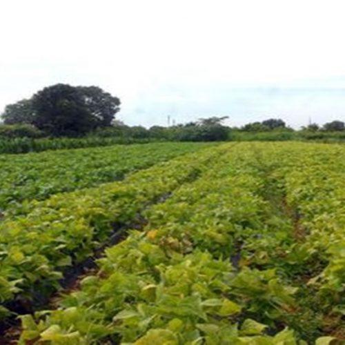 Bancos terão de destinar mais R$ 6 bilhões para pequenos produtores