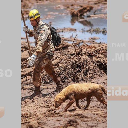 Equipe resgata 350 animais em Brumadinho