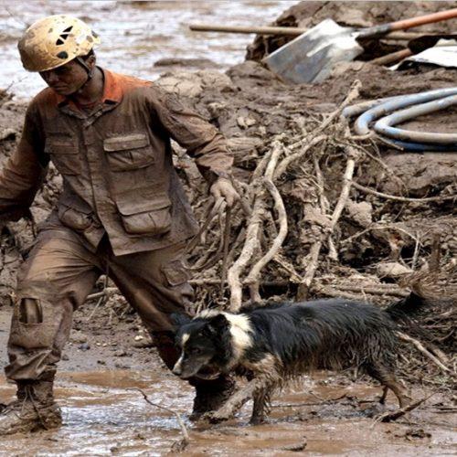 Com ajuda de cães farejadores, bombeiros trabalham no 17º dia de buscas em Brumadinho