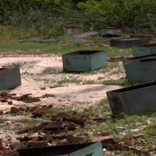 MONSENHOR HIPÓLITO | Apicultor tem prejuízo de R$ 12 mil após envenenamento de colmeias