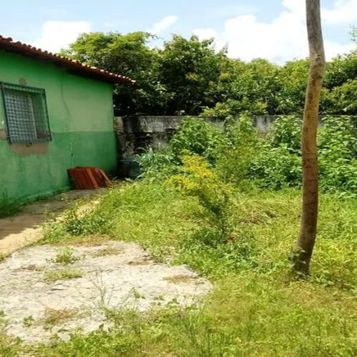 Pais de alunos dizem que mato está invadindo escola no Piauí