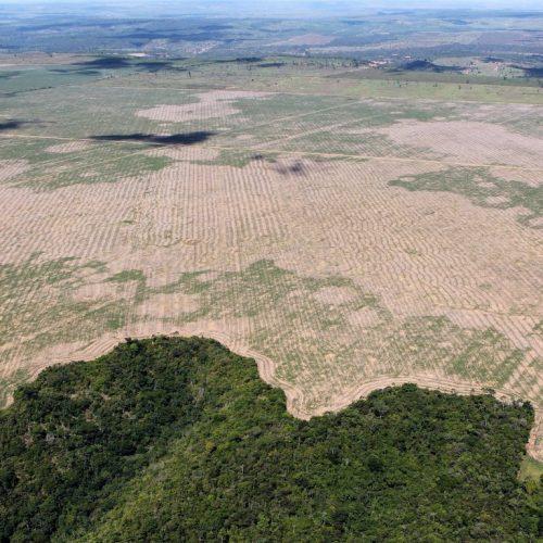 Bacia amazônica perdeu 295 mil Km² da sua cobertura vegetal