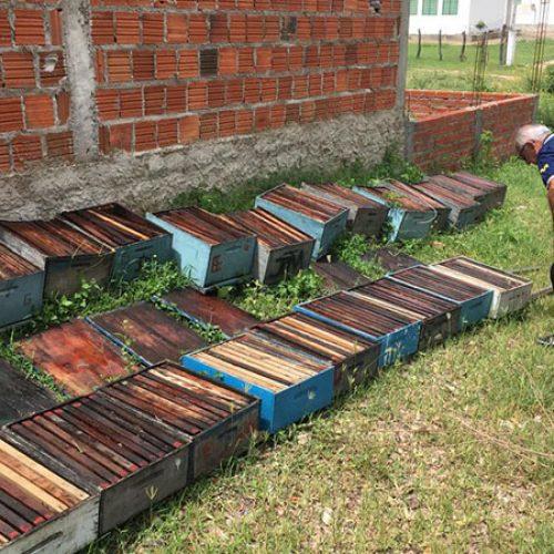 MONSENHOR HIPÓLITO | Adapi descarta problema sanitário e aponta ato criminoso em intoxicação de abelhas