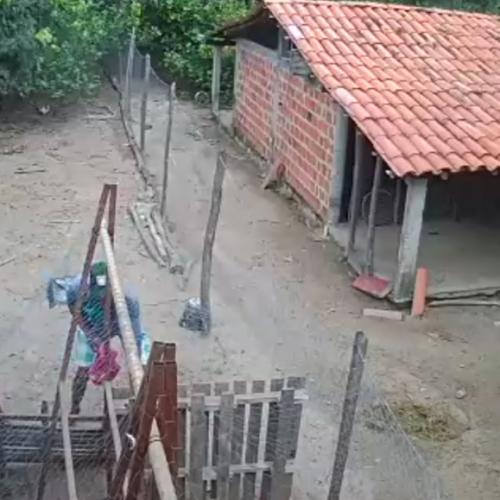 Câmeras flagram indivíduos furtando galinhas no Piauí; assista