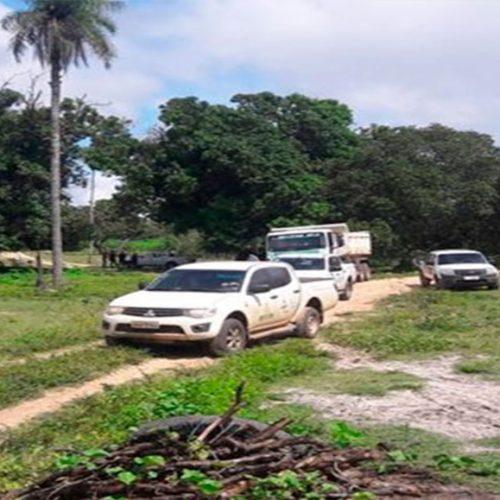 Peste suína: Defesa Sanitária coleta amostras em outros municípios do PI
