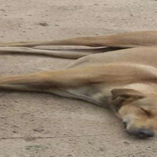 Cachorro ataca agricultor e é executado com tiro de espingarda no PI
