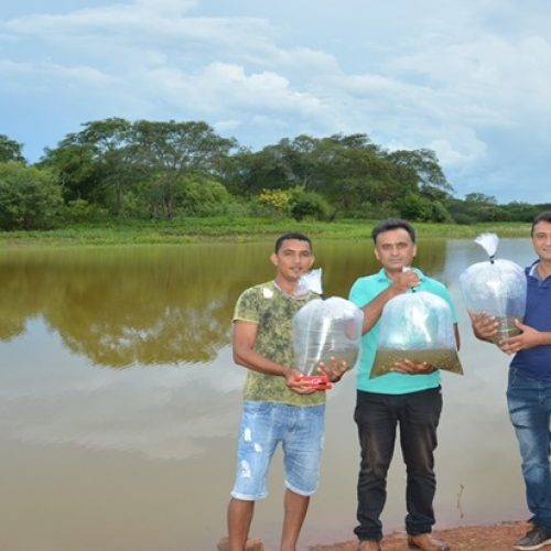 Secretaria de Agriculturade Geminiano distribui 10 mil alevinos e beneficia famílias de cinco comunidades rurais