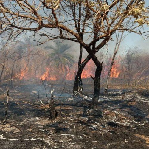 Piauí teve em 2019 o maior número de focos de incêndio dos últimos cinco anos entre janeiro e maio