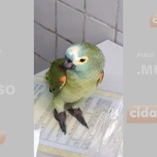 """Papagaio que gritou """"Mamãe, Polícia"""" é destaque em site internacional"""