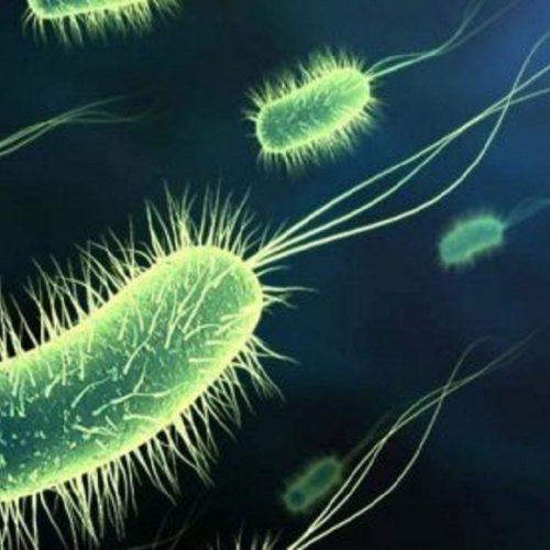 Ciência cria primeiro ser 100% editado e sintético