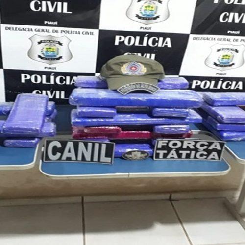 Droga apreendida em Picos é avaliada em R$ 50 mil