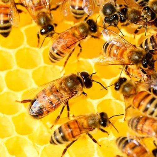 Seminário aborda novidades da apicultura e meliponicultura