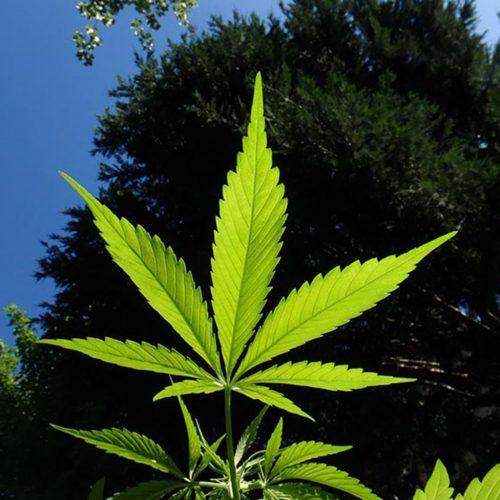 """Bebê nasce saudável após mãe tratar doença """"incurável"""" com óleo de cannabis"""