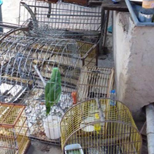 Polícia Ambiental apreende mais de 70 pássaros e carnes de animais silvestres no Piauí