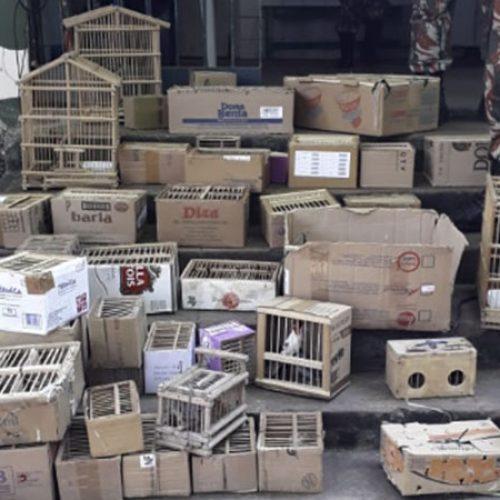 Mais de 120 aves silvestres são apreendidas em feira no Piauí