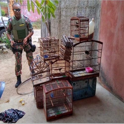 Aves silvestres são resgatadas de cativeiro e criador autuado por crime ambiental no Piauí