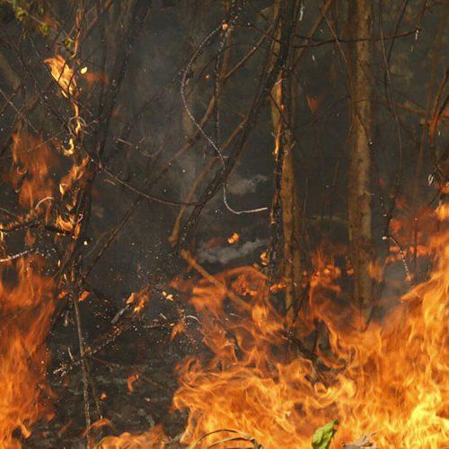 Piauí é o 3º estado do Nordeste com maior quantidade de focos de incêndio