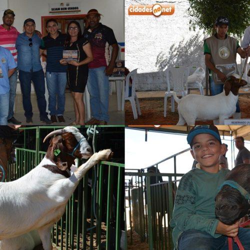 Setor agropecuário se desenvolve e produtores rurais locais são destaques na Exposição de animais de Jacobina do PI