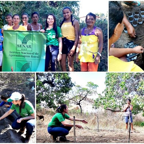 IPIRANGA│Senar promove curso sobre  manejo de hortaliças na comunidade Jardim
