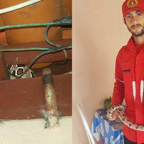 Bombeiro captura jiboia escondida em teto de residência no Piauí