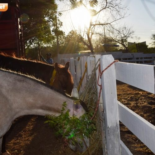 Confira as fotos do primeiro dia da Festa do Vaqueiro de Picos