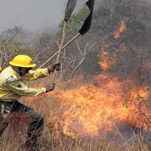 Ibama contrata brigadas para combater incêndios no Piauí e mais 17 estados