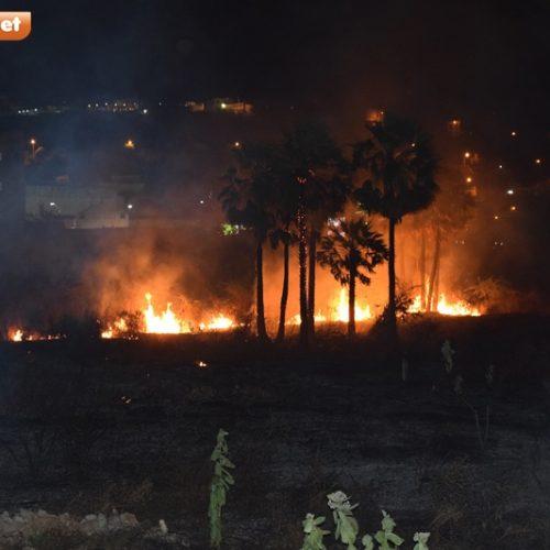 PICOS | Conheça os danos que as queimadas trazem ao meio ambiente