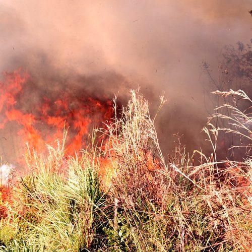 Focos de queimada no Piauí aumentaram 60% em julho; média de 17 por dia