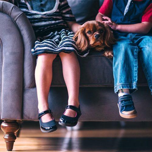 Animais de estimação ajudam a combater a depressão