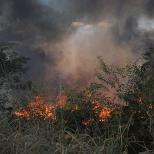 Piauí registrou 328 queimadas em apenas 24 horas, segundo Inpe