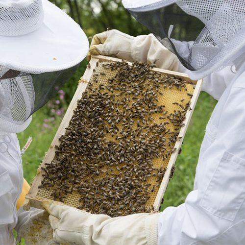 Picos, Pio IX, Itainópolis e Campo Grande são os municípios que mais produzem mel no Piauí; Estado é o maior exportador do País