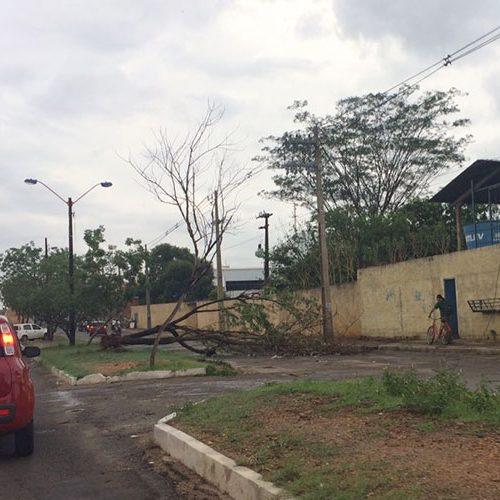 Equatorial aponta falta de poda como problema para queda de energia