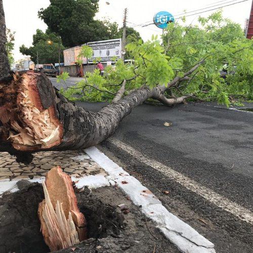 HUT e bairros de Teresina ficam sem energia, árvores e poste caem durante chuva com ventania