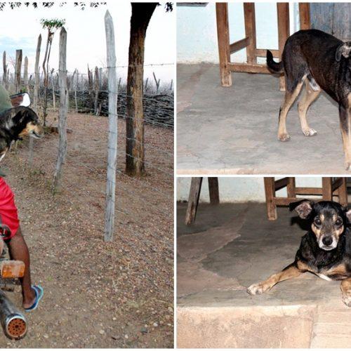 Conheça o cachorro na zona rural de Itainópolis que passeia em garupa de moto; veja vídeo