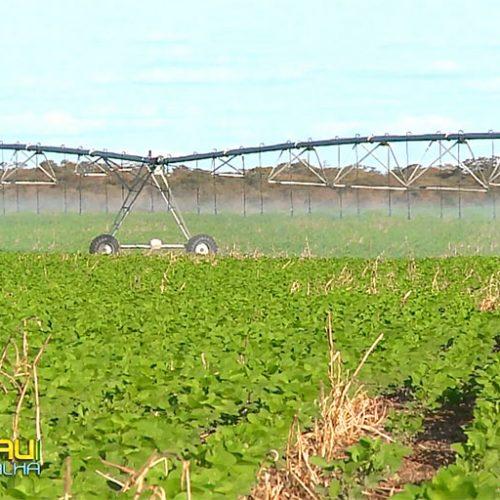 Produção de grãos gera até 300 mil empregos no Piauí, diz Aprosoja