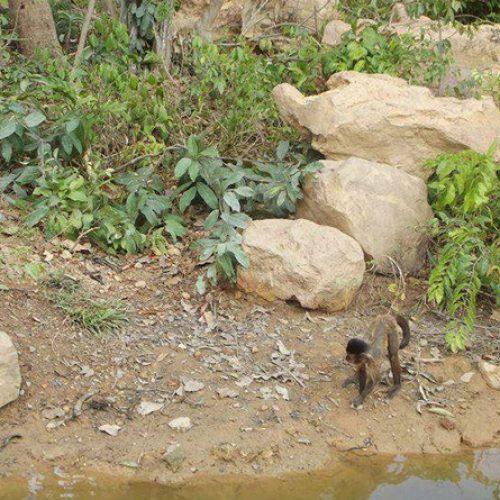 PI | Macacos são resgatados após fugirem devido a problema em bomba de água no Zoobotânico