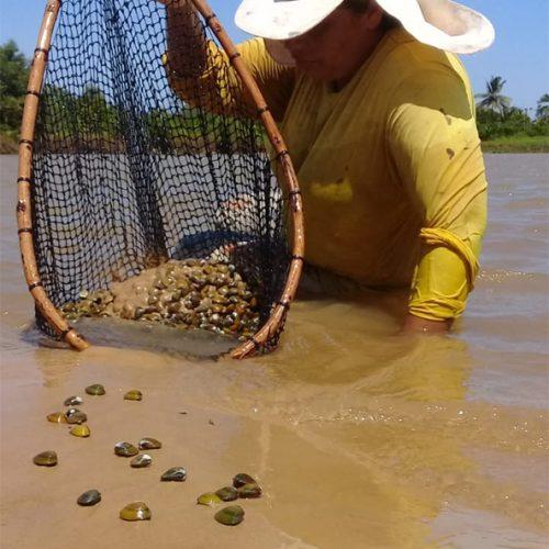 Óleo: catadores de mariscos do Piauí perdem clientes e vendas caem 98%, diz associação