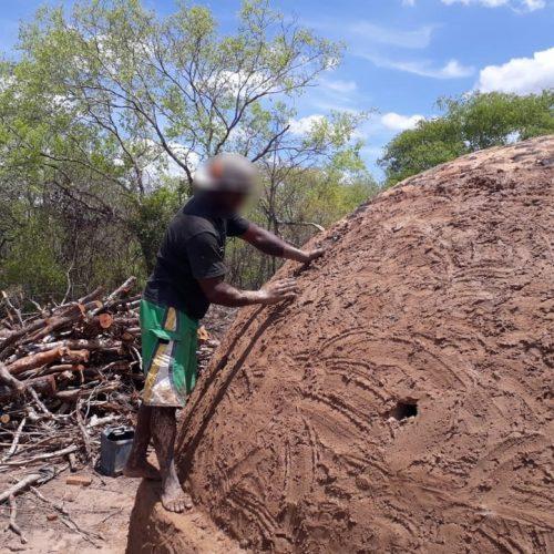 Trabalhadores rurais da Bahia são resgatados de carvoaria no Sul do Piauí