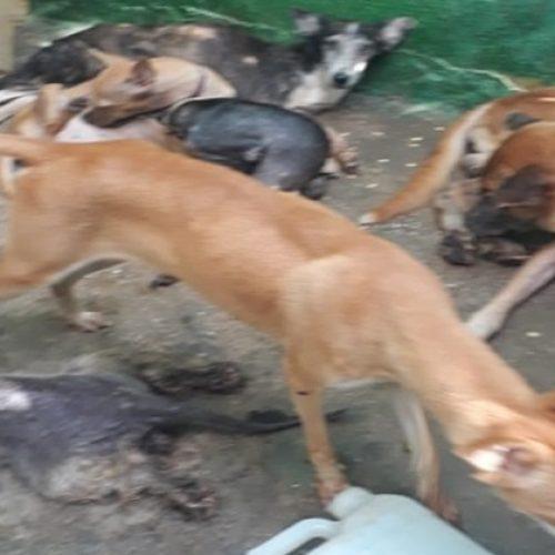 Polícia Civil resgata 23 animais em suposto abrigo clandestino no Piauí