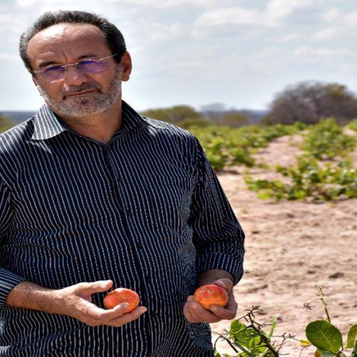 ALAGOINHA | Gestão de Jorismar incentiva a produção do caju; 10 mil mudas serão distribuídas