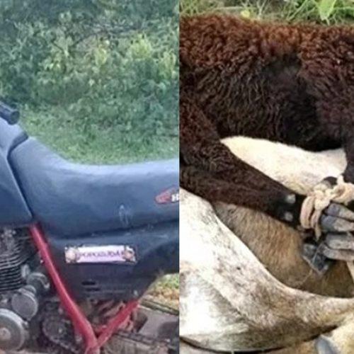 Dupla é presa suspeita de furtar ovelhas em município do Piauí