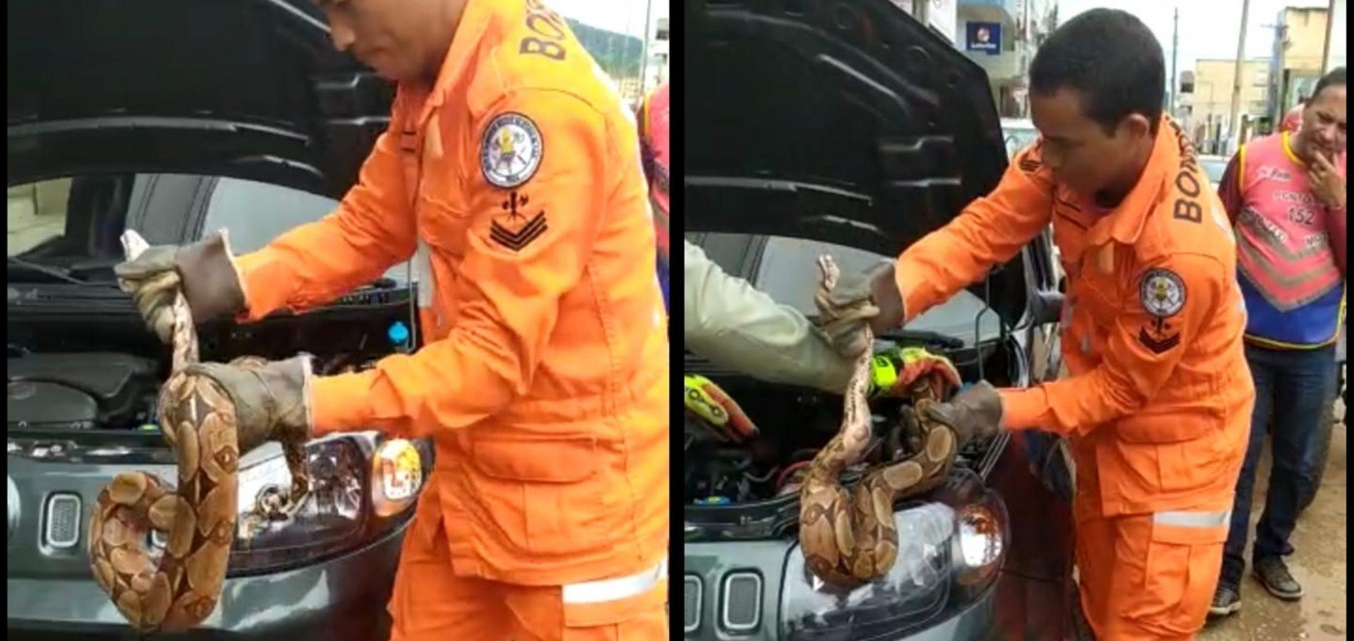 PICOS | Bombeiros capturam cobra em veículo na Avenida Getúlio Vargas