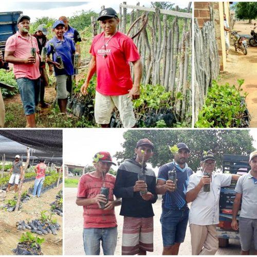 Deputado Franzé Silva destina 3 mil mudas de caju para produtores rurais de Pio IX