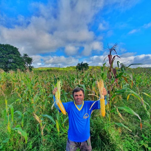 Com o apoio da Prefeitura, agricultores aumentam plantação e Caldeirão Grande pode ter a maior safra