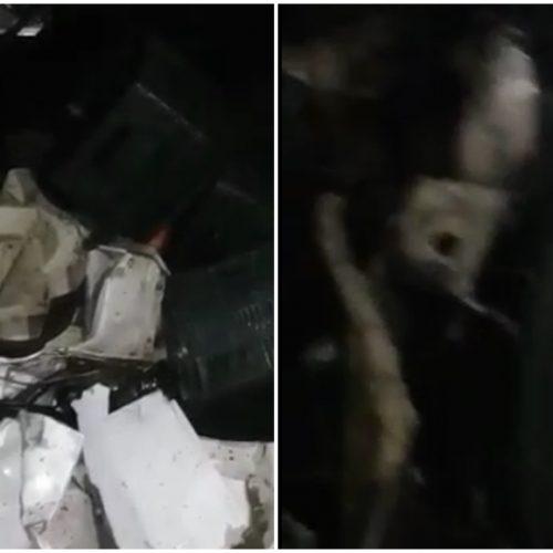 Colisão frontal entre caminhões deixa quatro pessoas mortas na BR-020 em Pio IX