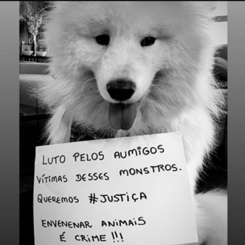 No Piauí, tutores fazem campanha nas redes sociais após morte de cadela